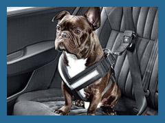 Перевозим собаку в авто по всем правилам